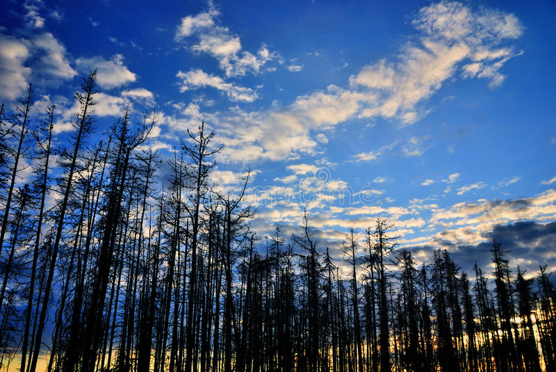 Árvores após um incêndio fotos de stock royalty free