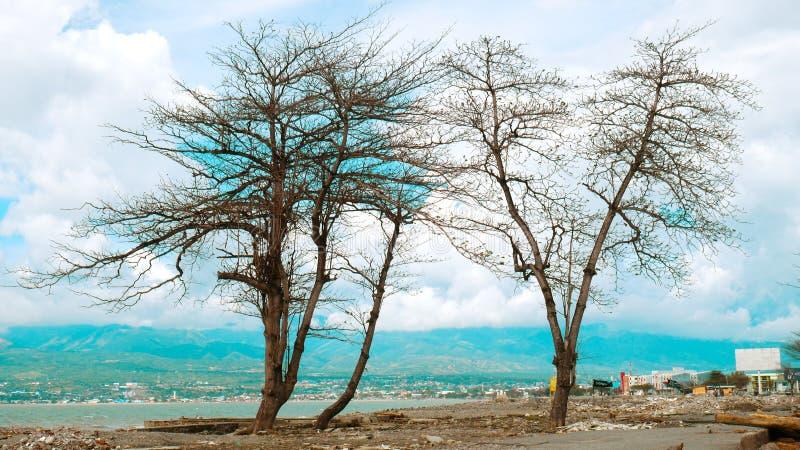 Árvores artísticas formadas pelo tsunami fotos de stock