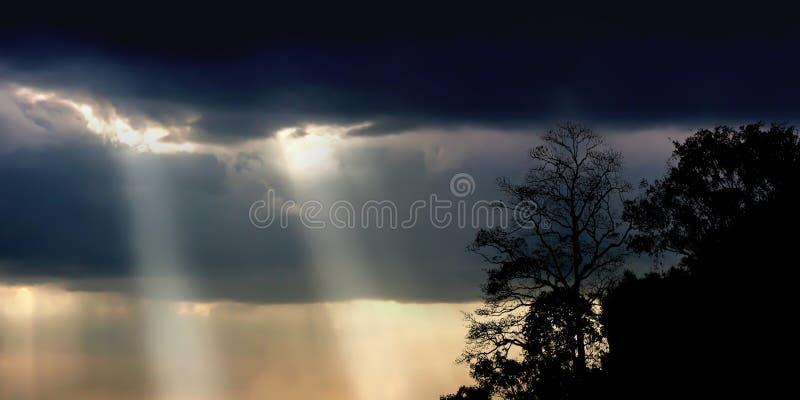Árvores assustadores da silhueta no céu assustador da obscuridade dos olhos maus fotos de stock