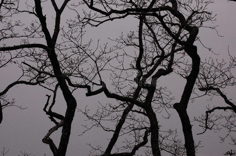Árvores através da névoa imagens de stock
