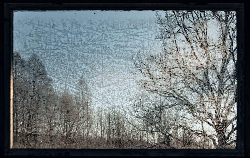 Árvores através de uma janela velha geada no inverno fotografia de stock royalty free