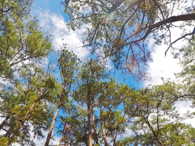 Árvores bonitas foto de stock royalty free