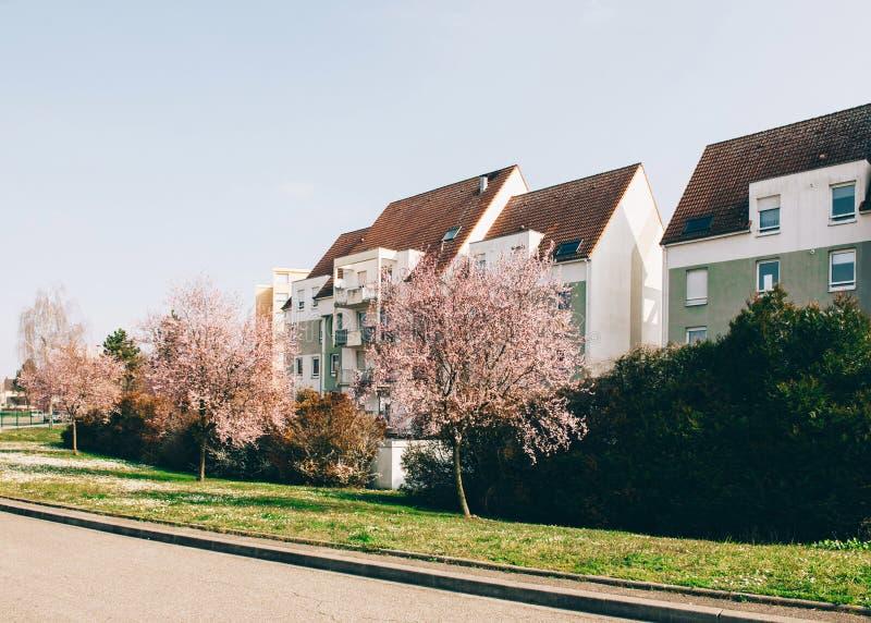 Árvores bonitas de sakura da árvore de cereja na flor com apartmen franceses foto de stock royalty free