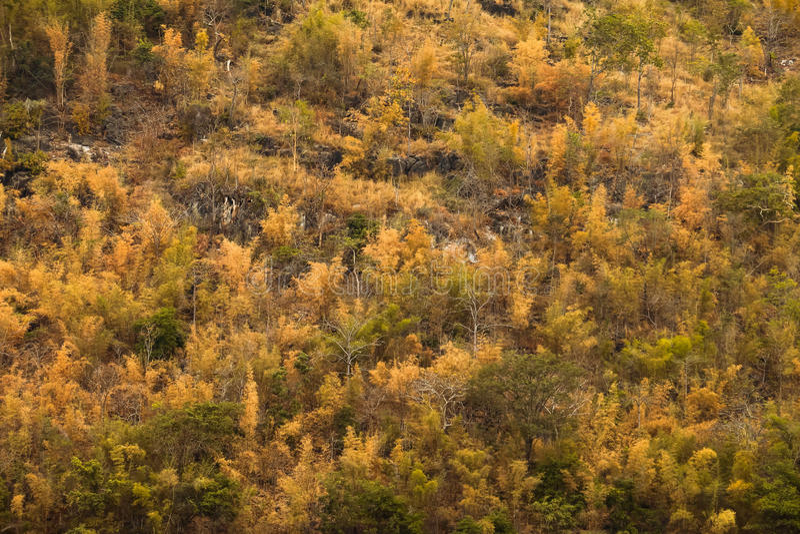 Árvores bonitas do outono das cores em uma floresta da montanha foto de stock royalty free