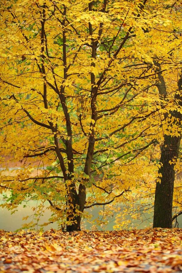 Árvores bonitas do outono. Paisagem outonal. imagens de stock royalty free