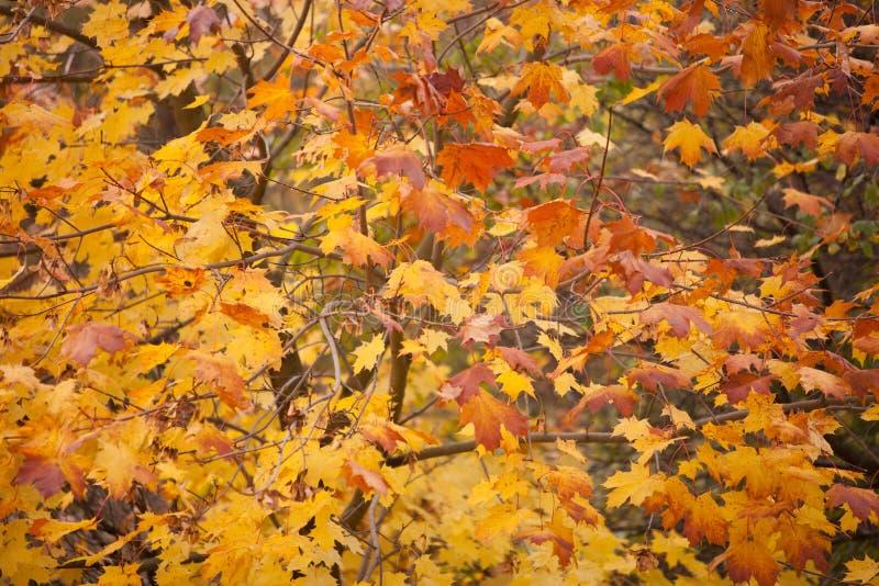 Árvores bonitas do outono. Paisagem outonal. imagem de stock royalty free