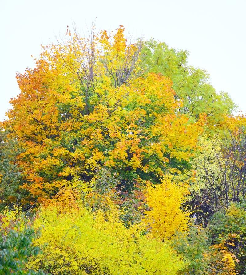 Árvores bonitas do outono. Paisagem outonal. fotos de stock