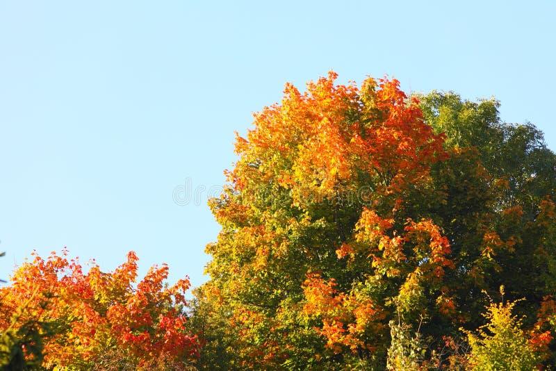 Árvores bonitas do outono. Paisagem outonal. imagem de stock