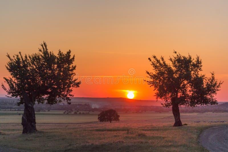 Árvores bonitas em uma cena rural no por do sol no verão fotografia de stock