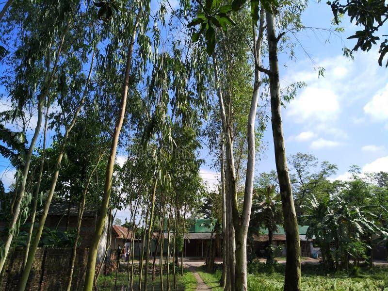 Árvores bonitas na floresta fotografia de stock