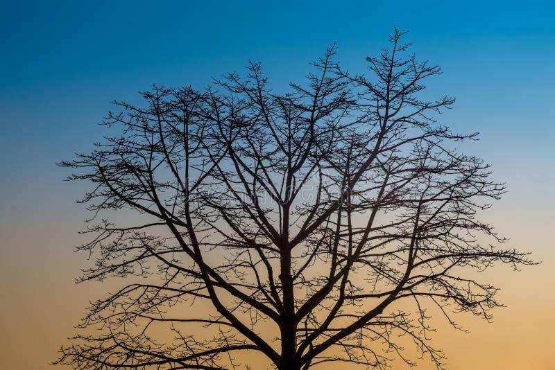 Árvores bonitas na floresta e no céu que ocorre na natureza, dando vários sentimentos fotografia de stock royalty free