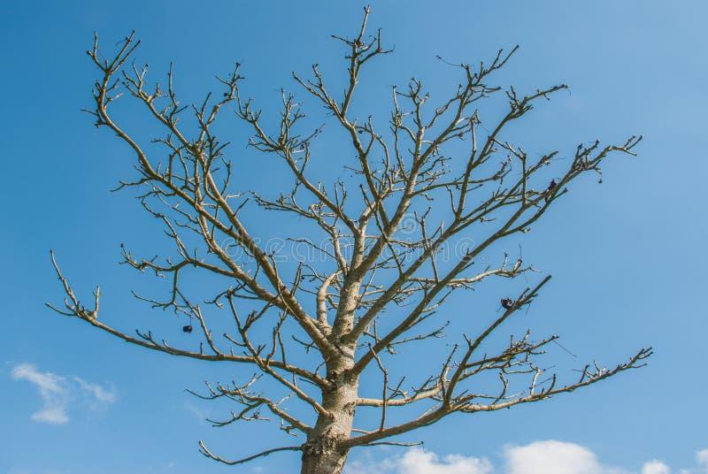 Árvores bonitas no parque de richmond Londres foto de stock royalty free