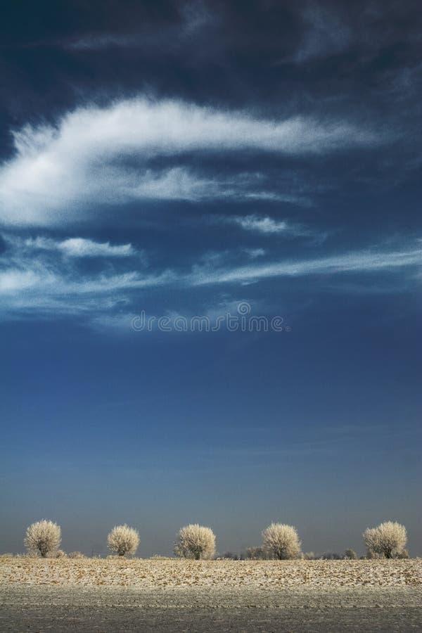 Árvores brancas e céu azul imagem de stock royalty free