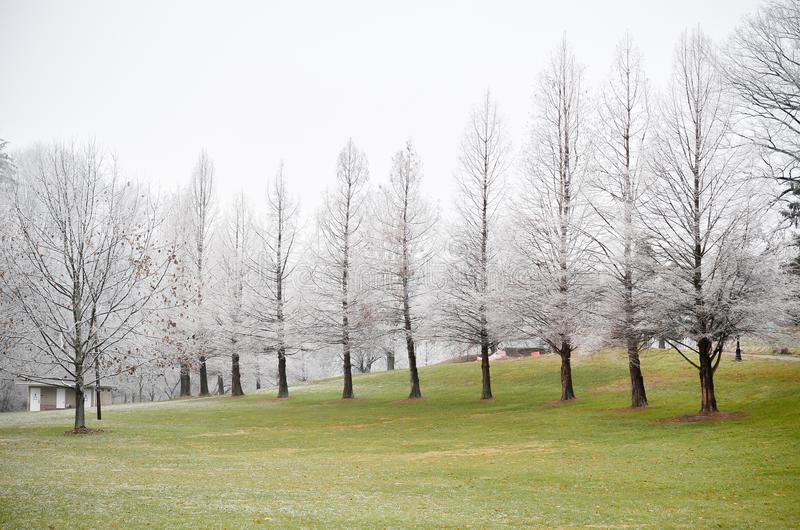 Árvores brancas geadas no campo de grama verde no inverno fotografia de stock royalty free