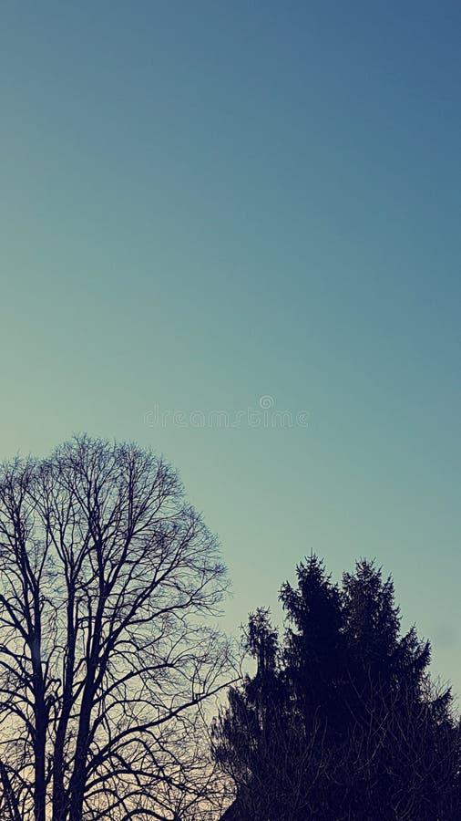 Árvores brilhantes do alvorecer dos azul-céu fotografia de stock royalty free