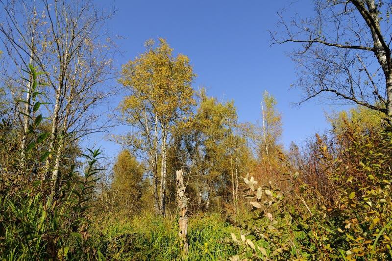 Árvores brilhantes do outono em um prado imagens de stock royalty free