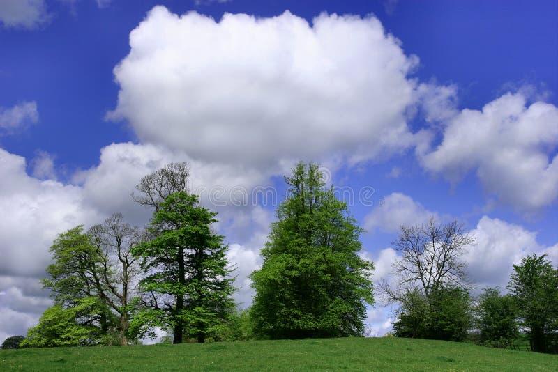 Árvores, céu e nuvens brancas inchado imagens de stock royalty free