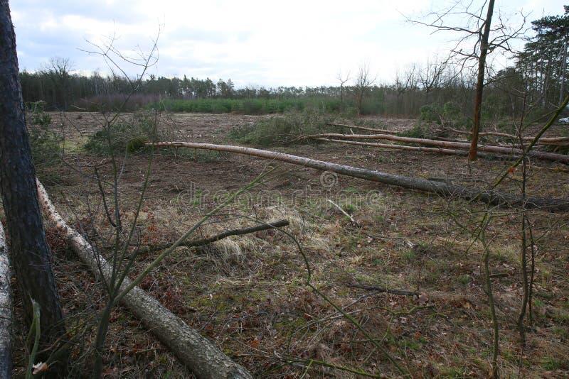 Árvores caídas após uma tempestade e um forte vento grandes fotos de stock