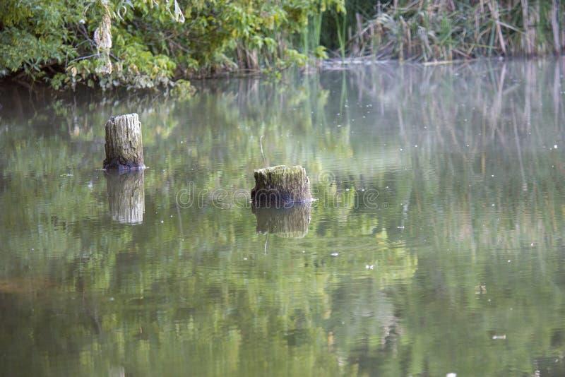 Árvores caídas bonitas dentro do lago, cotoes na água, paisagem do pântano no verão fotografia de stock