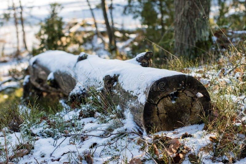 Árvores caídas nos logs da floresta cobertos com a neve que encontra-se no foto de stock