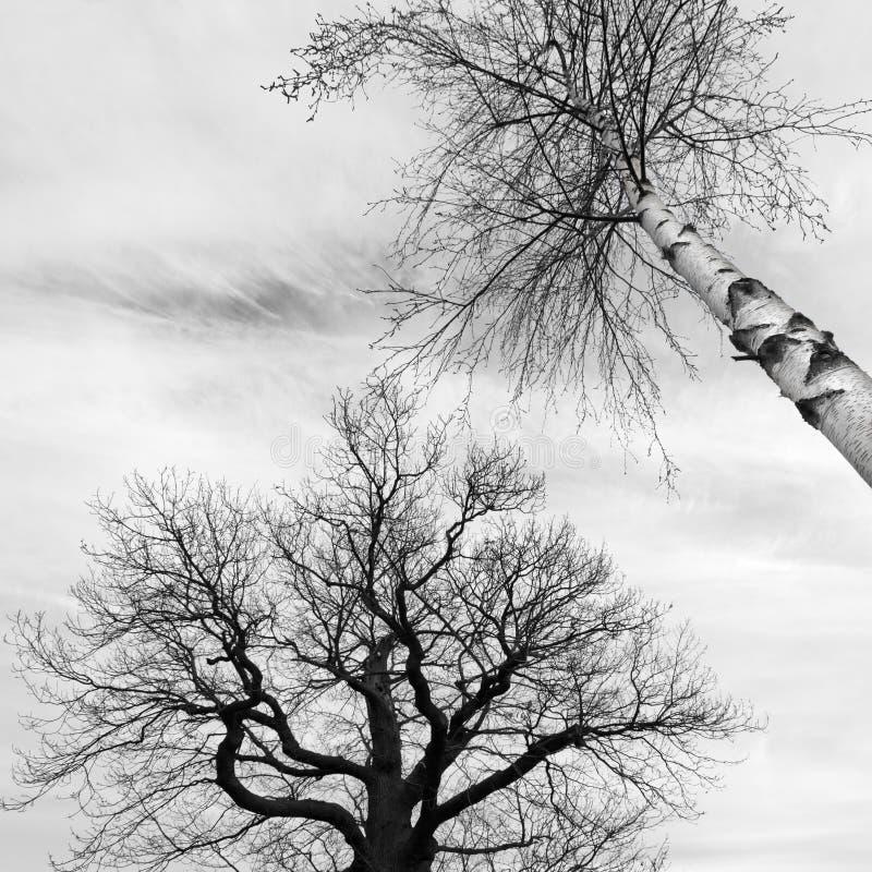 Árvores calvas em preto e branco fotografia de stock royalty free