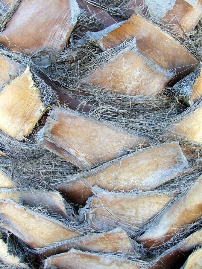 Árvores - close up do tronco da palma imagens de stock