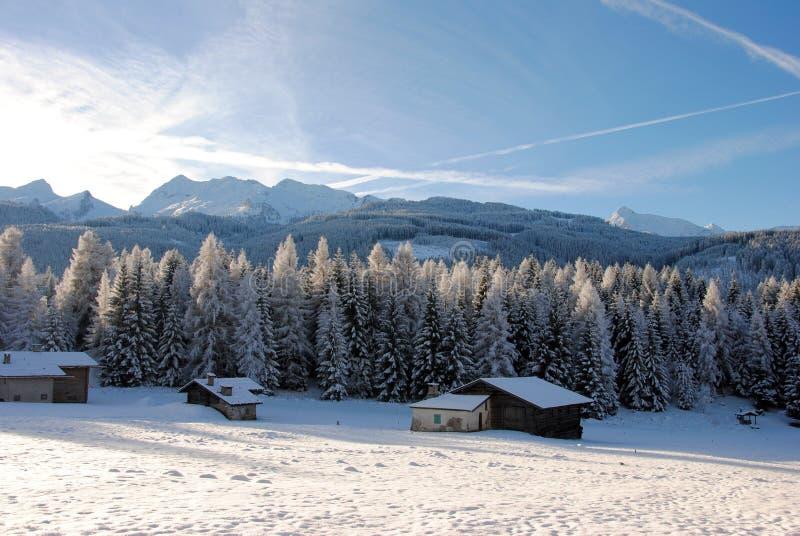 Árvores cobertas com a neve nas dolomites italianas imagem de stock