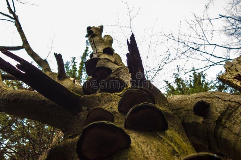 Árvores cobertas com os cogumelos imagens de stock