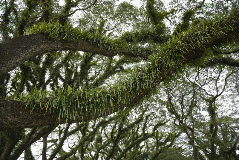 Árvores cobertas no crescimento imagem de stock royalty free