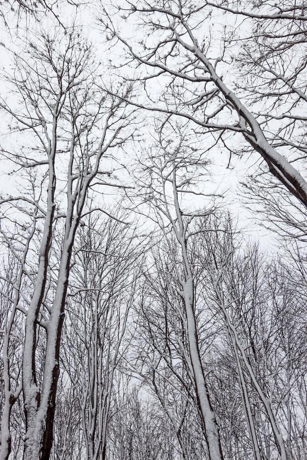 Árvores cobertas pela neve imagens de stock