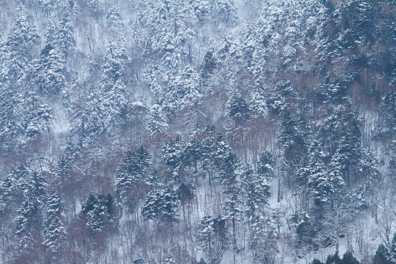 Download Árvore com neve foto de stock. Imagem de bonito, quadro - 29840462