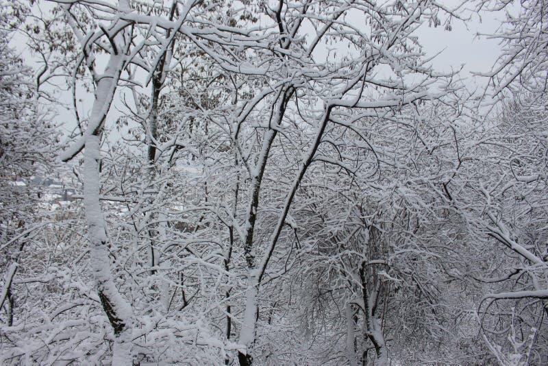 Árvores cobertos de neve em janeiro na montanha 2019 de Belasitsa em Petrich - inverno búlgaro fotografia de stock royalty free