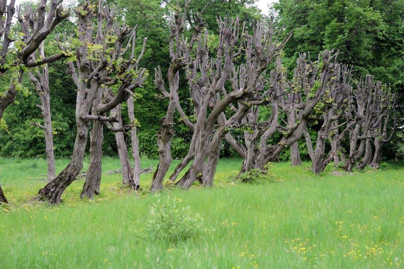 Árvores colhidas fotos de stock