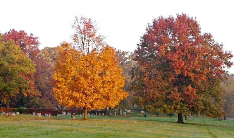 Árvores coloridas da queda que começam a perder suas folhas em um cemitério imagem de stock