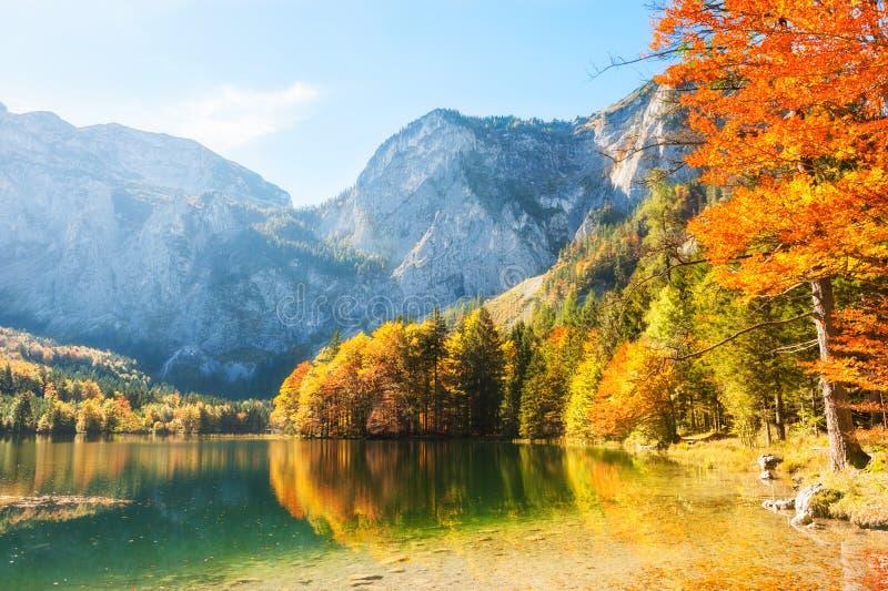 Árvores coloridas do outono na costa do lago nos cumes, Áustria fotografia de stock royalty free