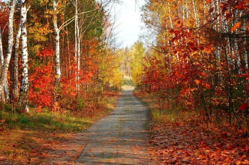 Árvores coloridas do outono no parque fotos de stock royalty free