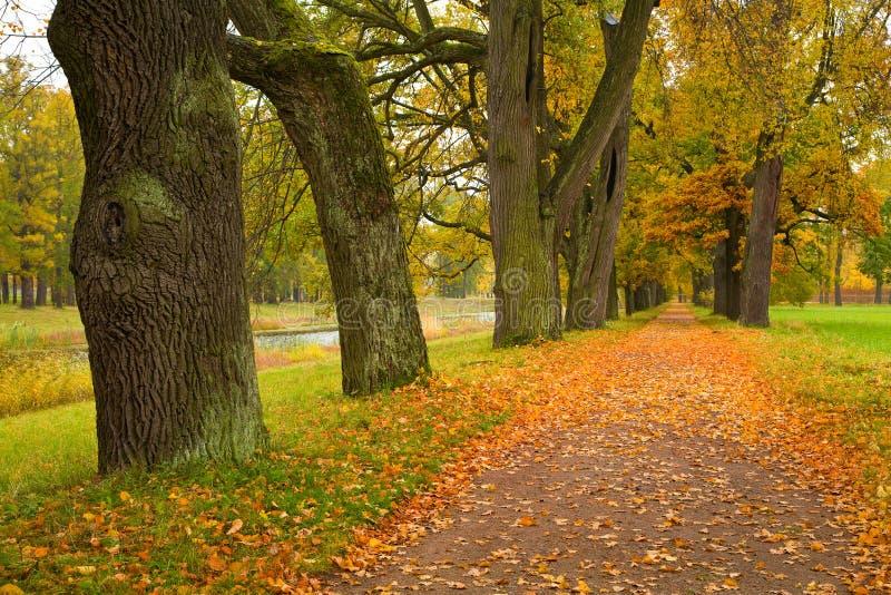 Árvores coloridas do outono no parque fotos de stock