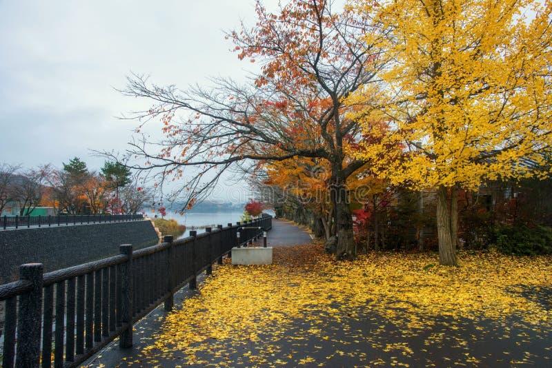 Árvores coloridas do outono perto do lago Kawaguchiko foto de stock royalty free