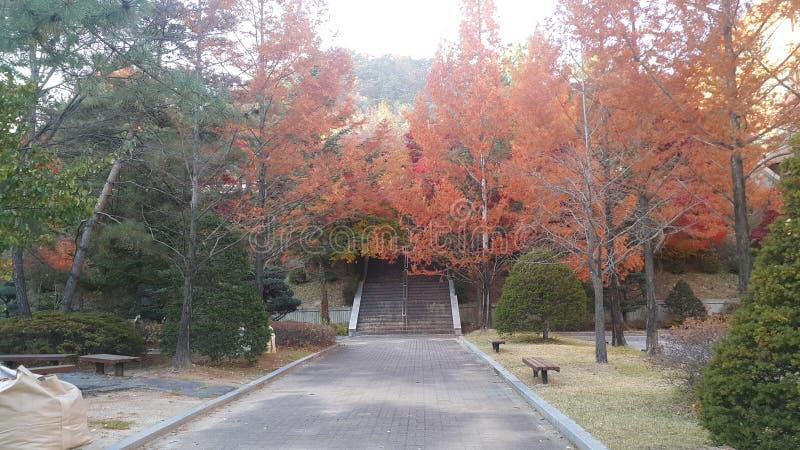 Árvores coloridas e folhas secadas na terra no parque nos lados de um caminho fotos de stock royalty free