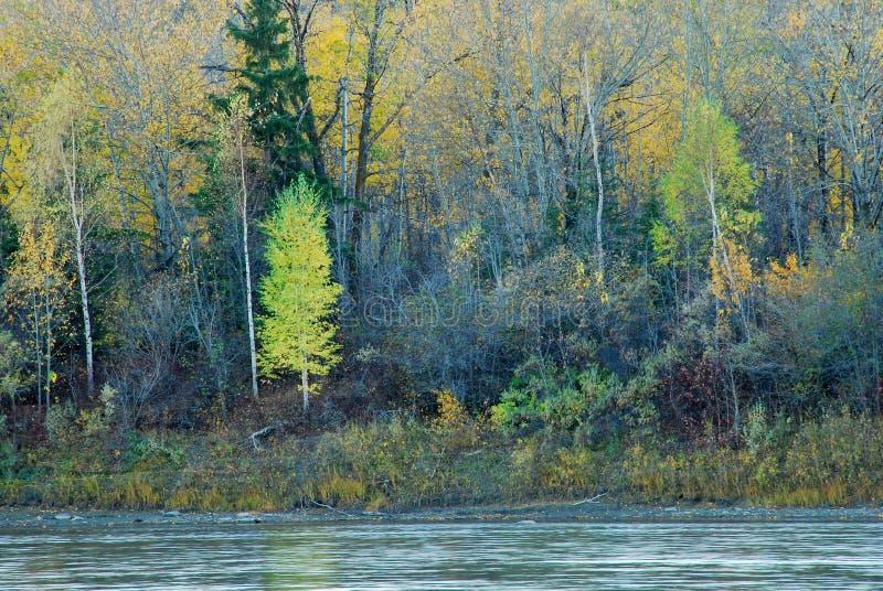 Árvores coloridas em River Valley fotografia de stock