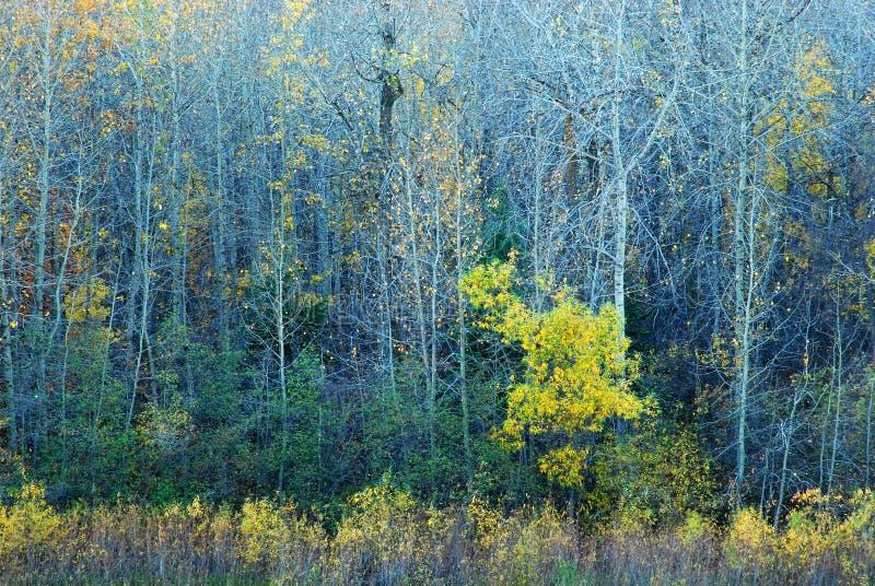 Árvores coloridas em River Valley fotografia de stock royalty free