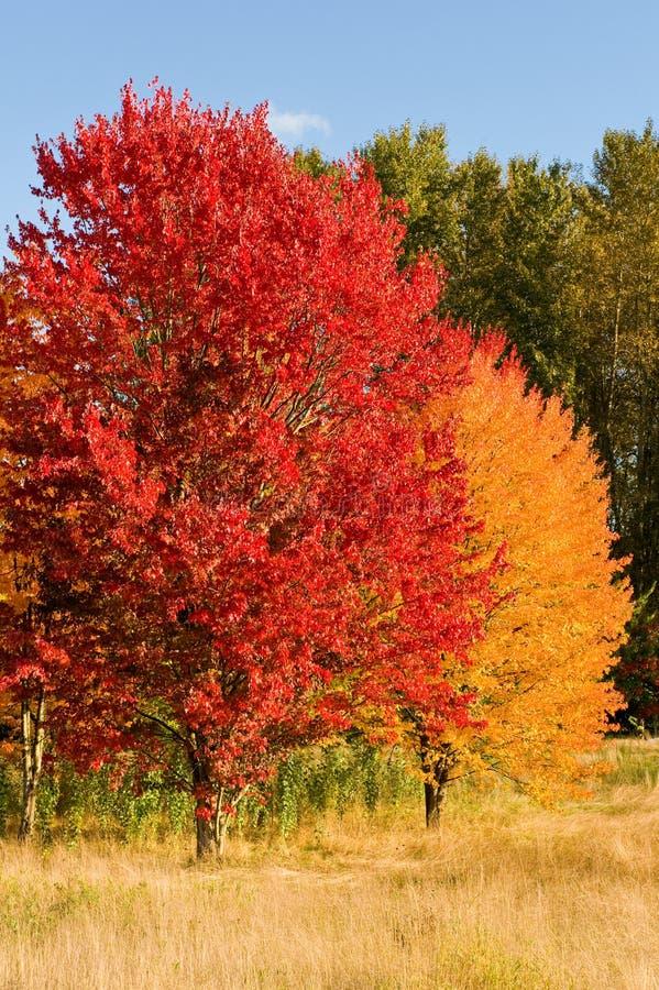 Árvores coloridas no outono foto de stock royalty free