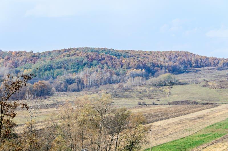 Árvores coloridas no tempo do outono, região de Horezu imagens de stock