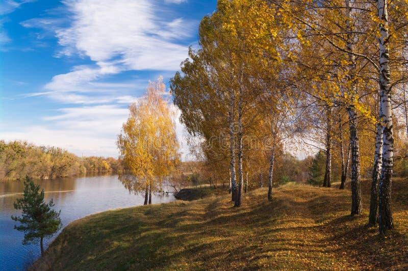 Árvores com as folhas amarelas no montanhês pelo rio contra um céu azul em um dia ensolarado Autumn Landscape imagem de stock royalty free