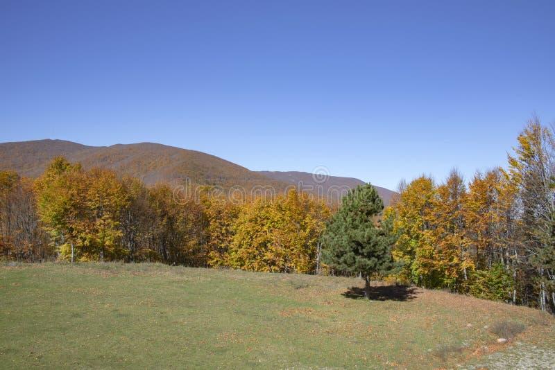 Árvores com as folhas de outono douradas, amarelas e marrons em um fundo dos montes foto de stock royalty free