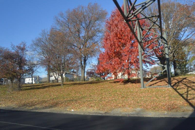 Árvores com as folhas vermelhas no outono atrasado foto de stock royalty free
