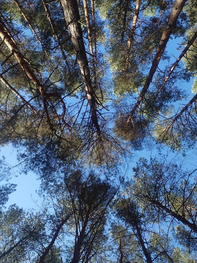 Árvores com céu fotografia de stock royalty free