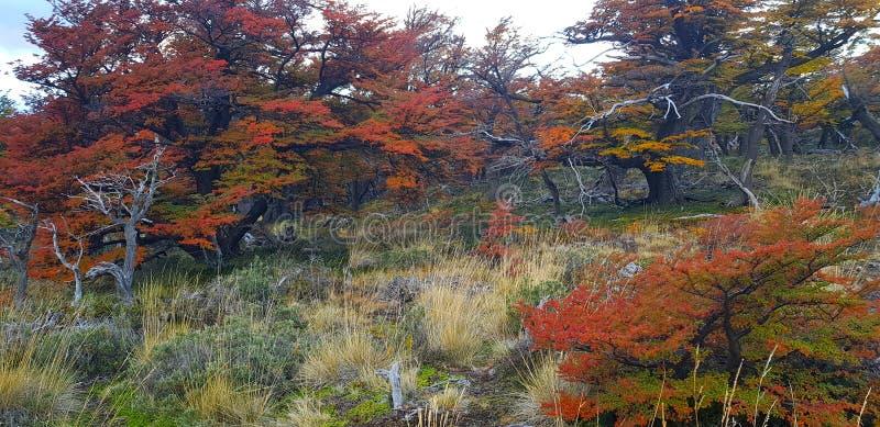 Árvores com cores do outono e montagem Fitz Roy, Patagonia, Argentina fotografia de stock