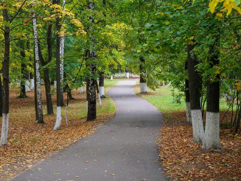 Árvores com folha amarelando ao longo do trajeto no parque do outono fotos de stock royalty free