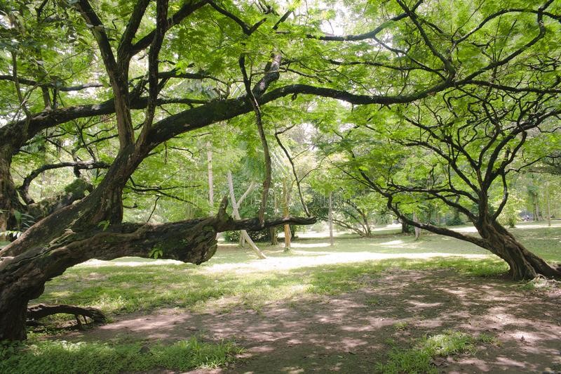 Árvores com muitos ramos foto de stock royalty free